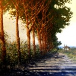 Corsican Pines